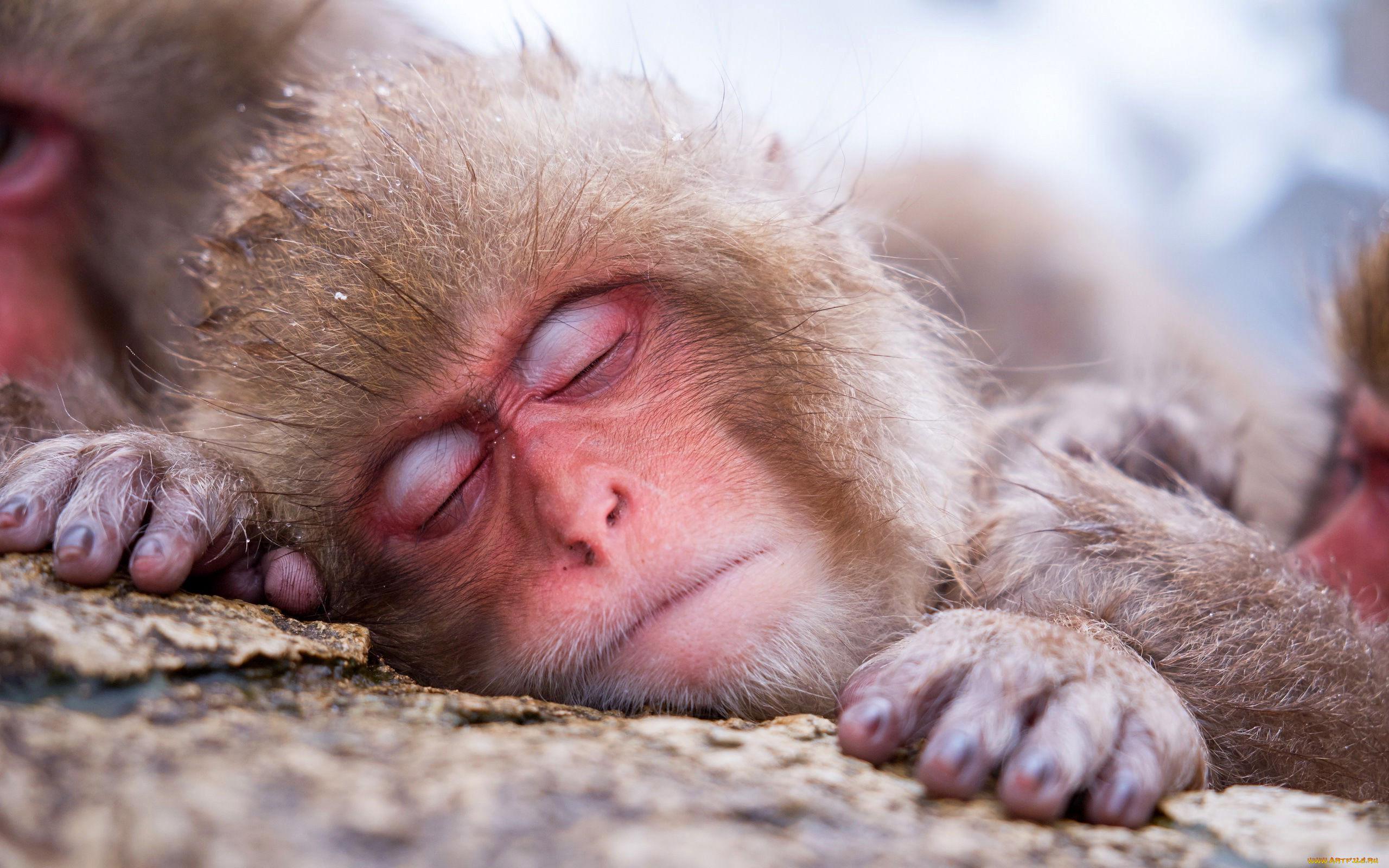 фото как спят животные вам подборку